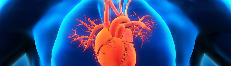 Cardiovascular Medical Travel Surgery Health Vantis